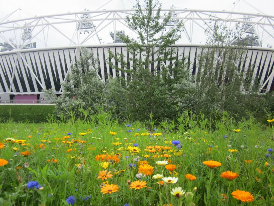 London Olympic Park  - sttadium and garden