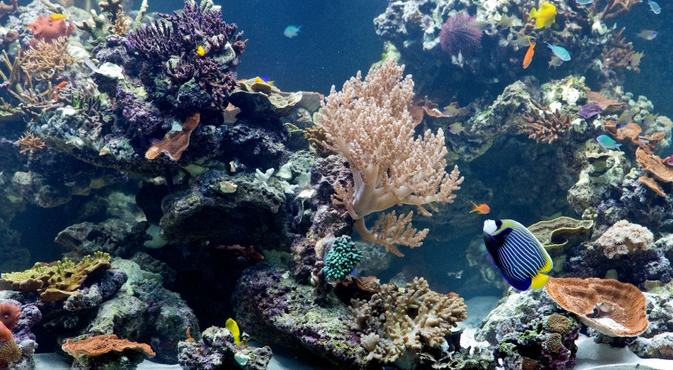 the advantages of coral reefs for The degradation of coral reefs might have short-term benefits for some fish groups, but would be bad for fisheries long-term, according to a university of queensland.