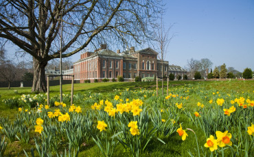 Kensington Palace - Springtime daffodils bloom in the east front gardens.