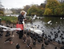 London Royal Parks: Lady feeding birds in St James's Park. Photo Credit: ©Ursula Petula Barzey.