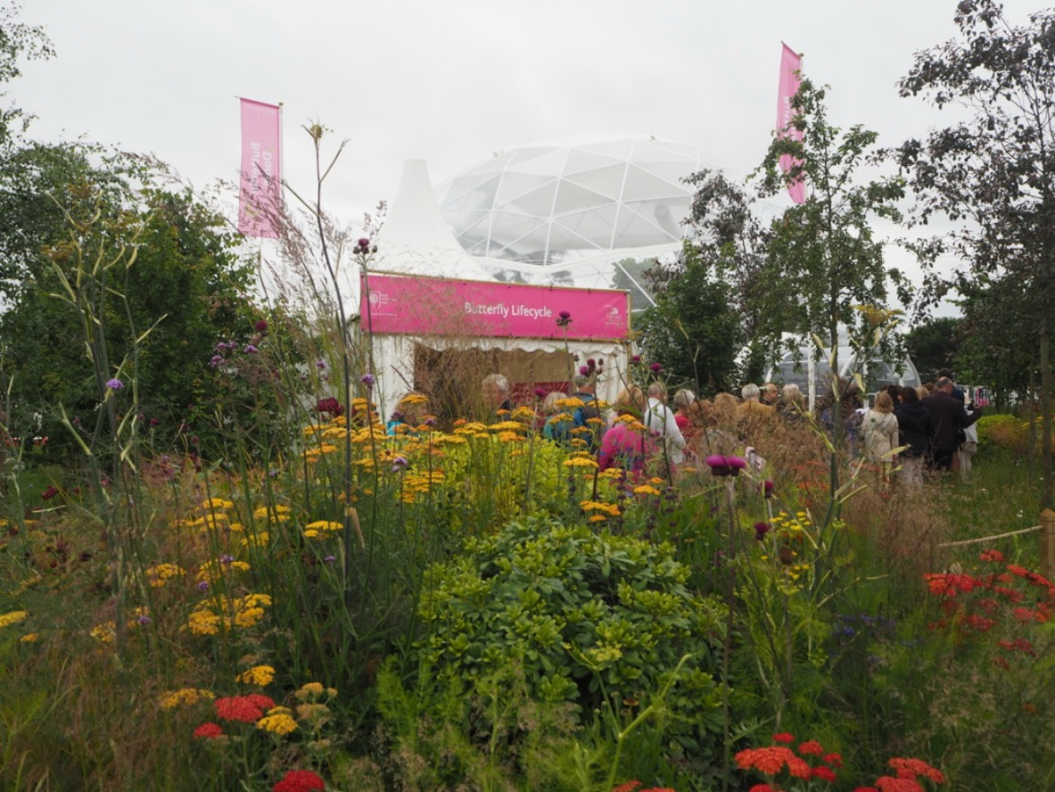 Butterfly dome at 2016 rhs hampton court palace flower show guide london - Hampton court flower show ...