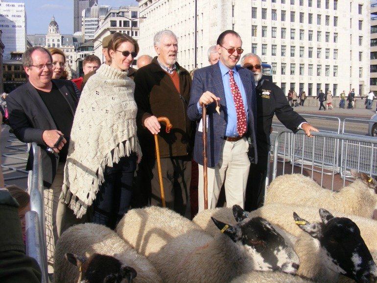 Sheep drive over London Bridge. Photo Credit: ©David Jagger.