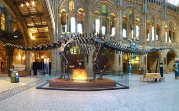 Dippy the Diplodocus at Natural History Museum. Photo Credit: © Natural History Museum.