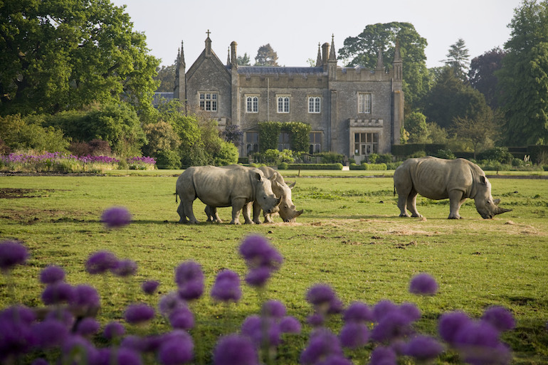The Cotswolds: View of the Cotswold Wildlife Park in May 2010 with Rhino's in foreground. Photo Credit: © Andrew Lawson via Visit England / Cotswold Wildlife Park.