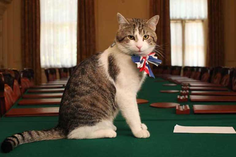 Famous Cats in London: Larry, Chief Mouser to the Cabinet Office. Photo Credit: © OGL via Wikimedia Commons.
