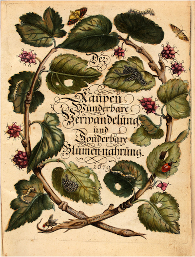 Title page of The Caterpillars' Marvelous Transformation and Strange Floral Food, first volume, published 1679 by Maria Sibylla Merian. Photo Credit: © Wikimedia Commons.