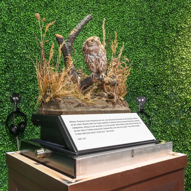 Athena - beloved Owl belonging to Florence Nightingale. Photo Credit: © Florence Nightingale Museum London.