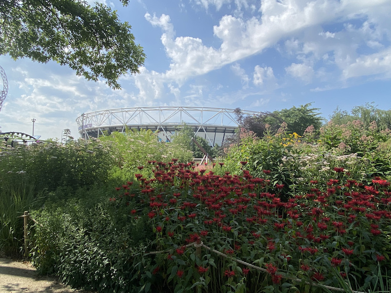 Wildflowers near London Stadium at Queen Elizabeth Olympic Park. Photo Credit: ©Sarah Wood.
